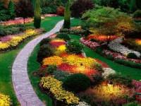 Как создать клумбы из низкорослых цветов?
