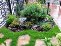 Хвойные растения для приусадебного участка