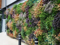 Вертикальное озеленение приусадебного участка и закрытых помещений