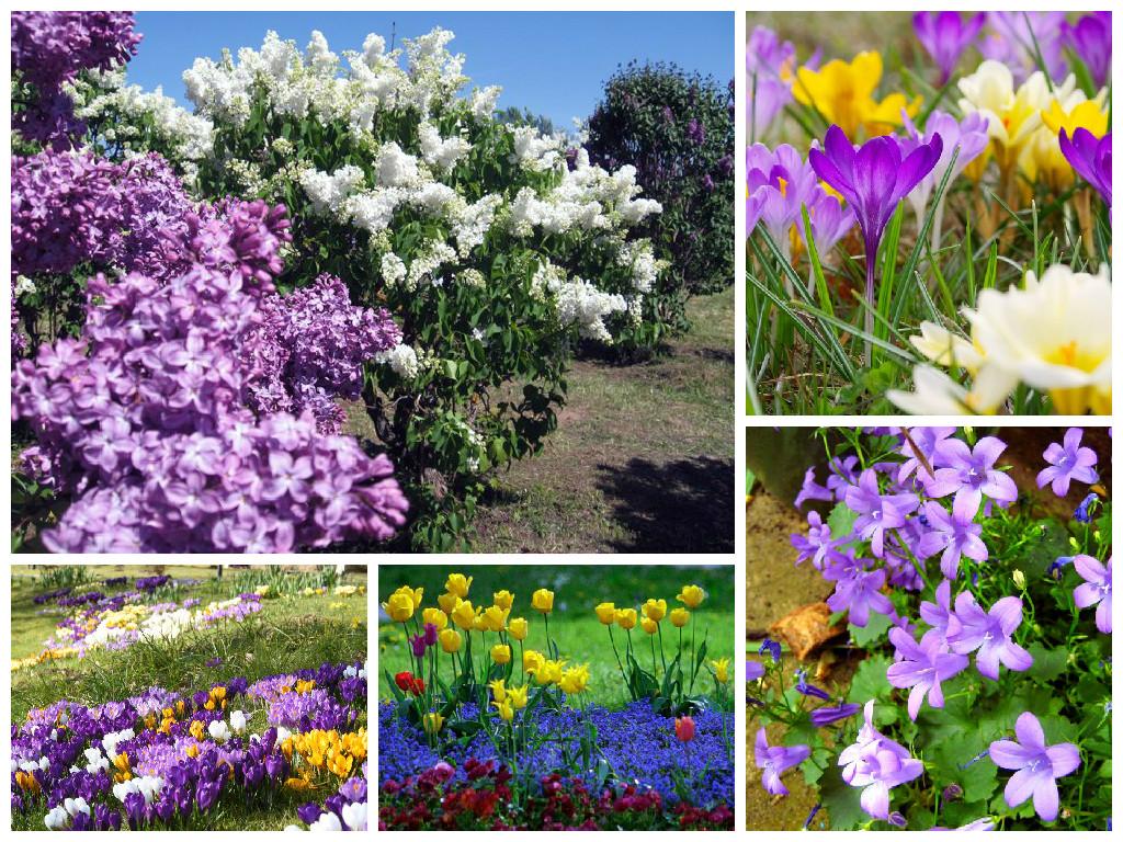Пример цветов для садовода