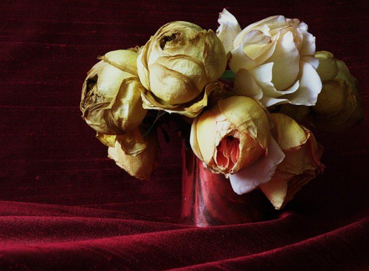 Картина с изображением увядших роз