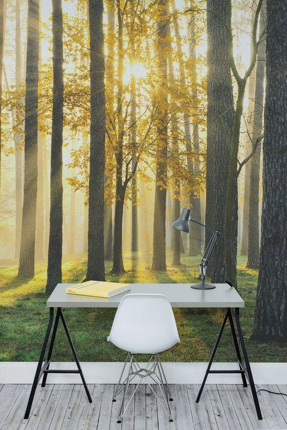 Изображение рассвета в лесу на фотообоях