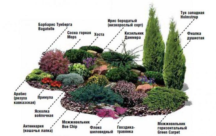 Пример расположения растений в альпийской горке