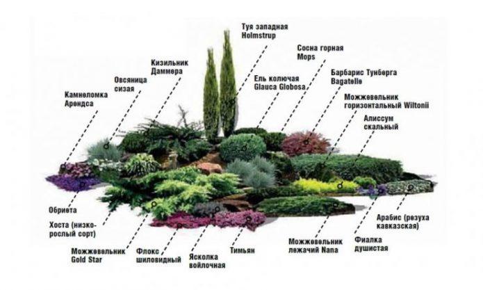 Пример расположения растений в альпинарии