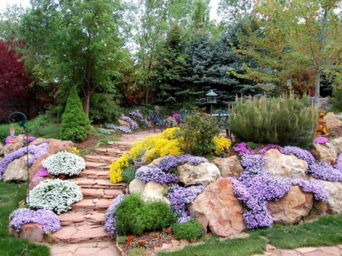 Альпийская горка с почвопокровными растениями и каменными ступенями