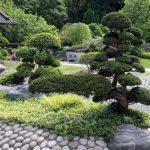 Сосны в японском саду
