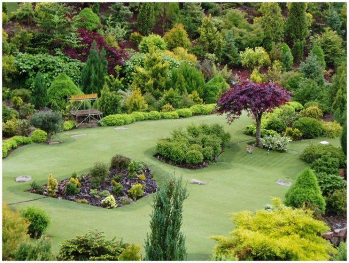 Хвойные растения в большом парке