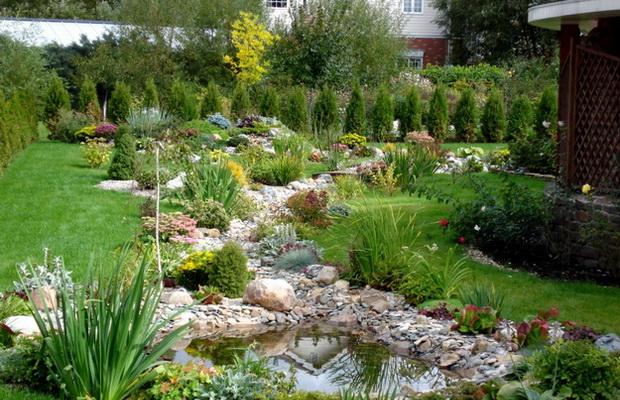 Живая изгородь из хвойных в саду