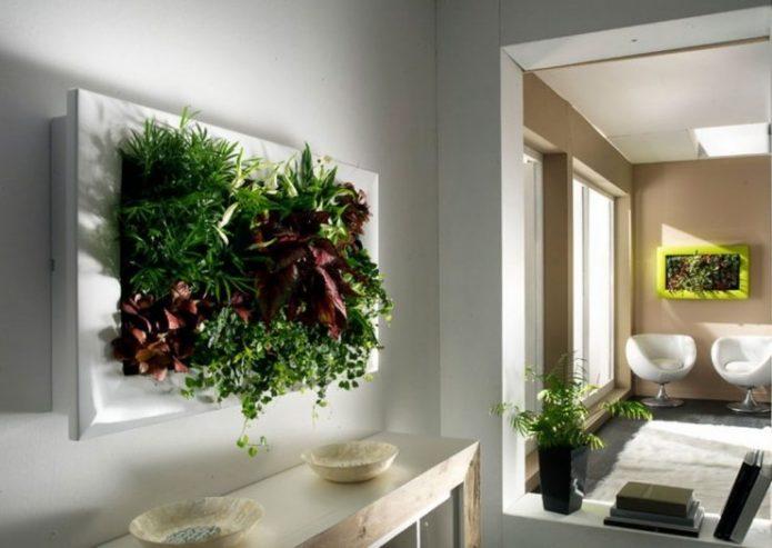 Картина из растений в квартире