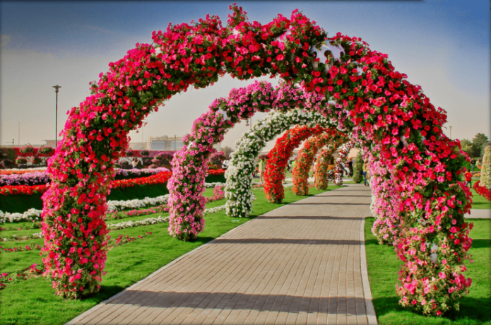 Своды из цветущих растений в парке