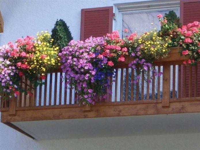 Цветы на балконев контейнерах