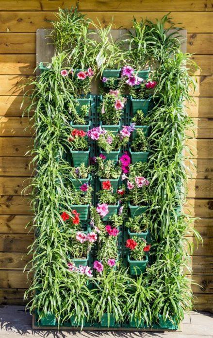 Композиция из растений в контейнерах