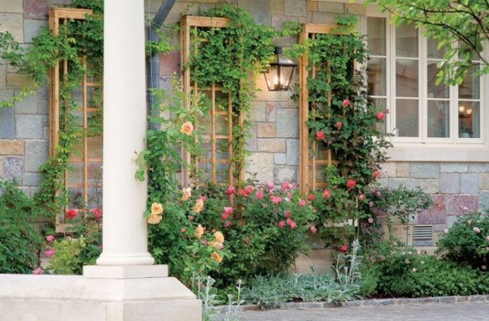 Шпалеры с растениями возле стены дома