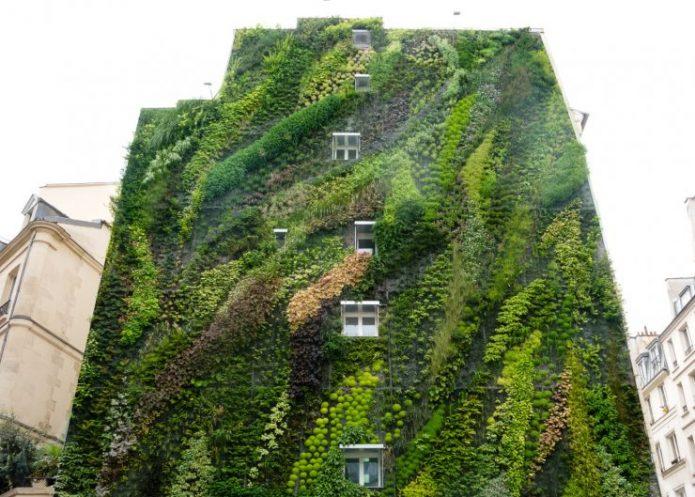 Многоквартирный дом обвитый растениями