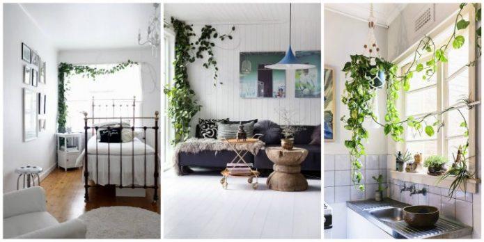 Вьющиеся растения в квартире