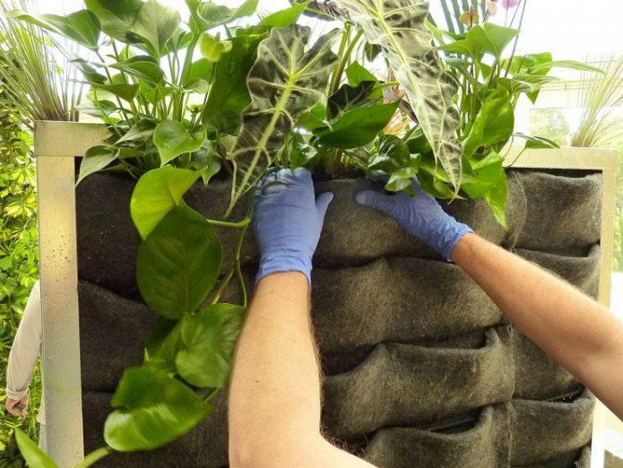 Войлочный фитомодуль для вертикального озеленения