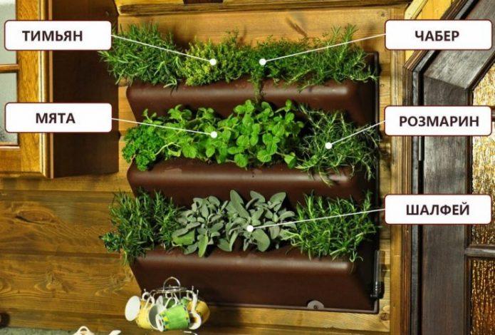 Контейнеры для вертикального озеленения из пластика