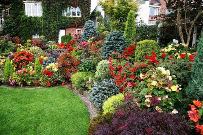 Миксбордер из цветов и кустарников на участке