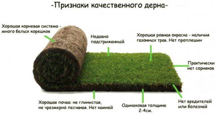 Признаки качественного рулонного газона