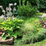 Каменистый сад — рокарий