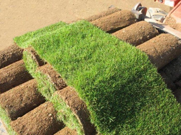 Рулоны с газонной травой
