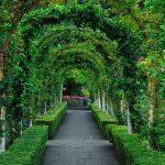 Вертикальное озеленение алеи