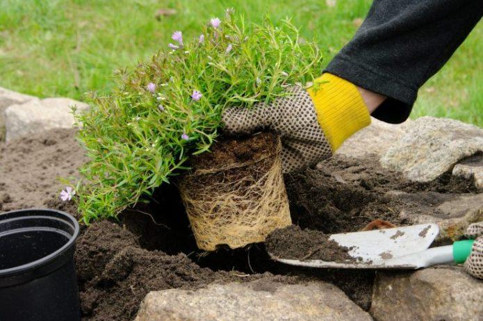 Высаживание растений в рокарий