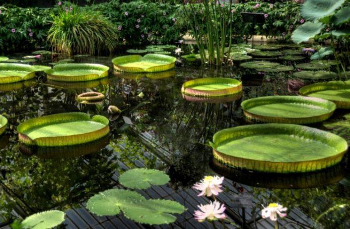 Ботанический сад в Британии