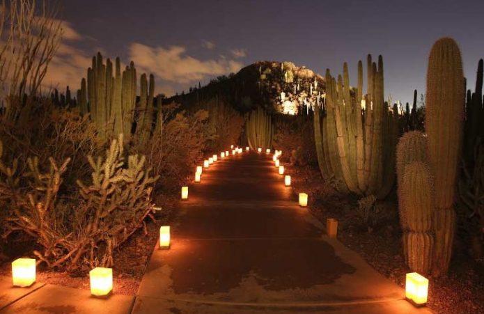 Американский ботанический сад в аризоне