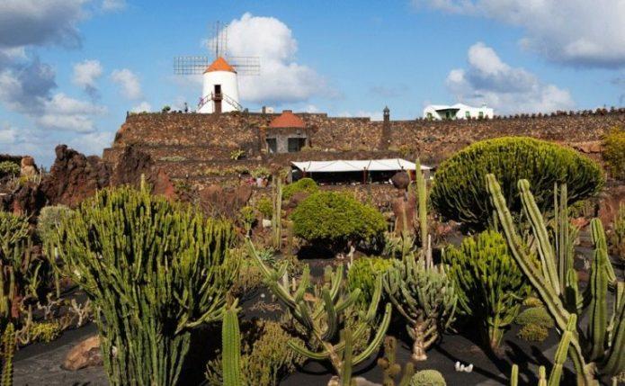 Сад кактусов на Канарских островах