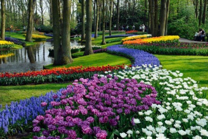 Сад-парк Кекенхоф в Голландии