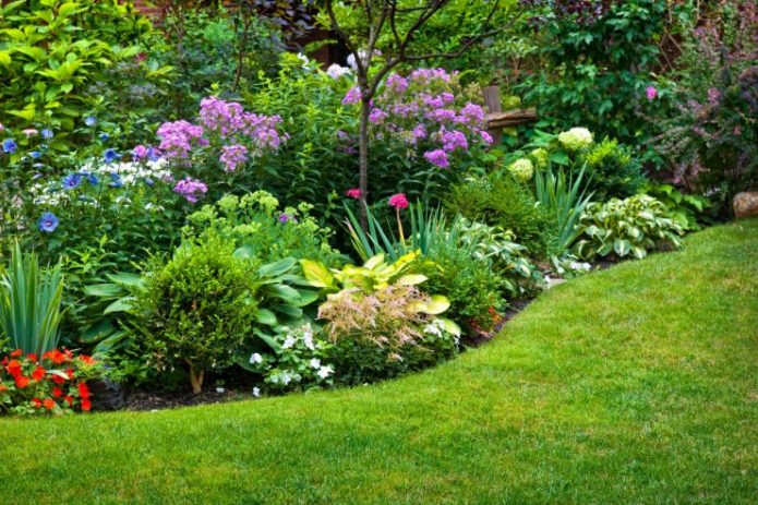Миксбордер с цветами и кустарниками