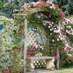Беседка из роз
