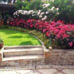 Розовые розы в саду