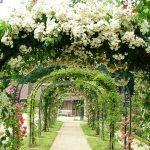 Туннель из роз