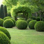 Кусты самшита в ландшафтном дизайне