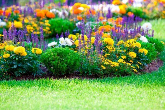 Миксбордер из ярких цветов