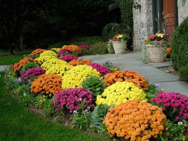 Яркий цветник из нискорослых цветов