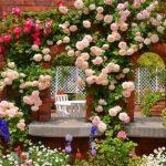 Стены, оплетенные розами